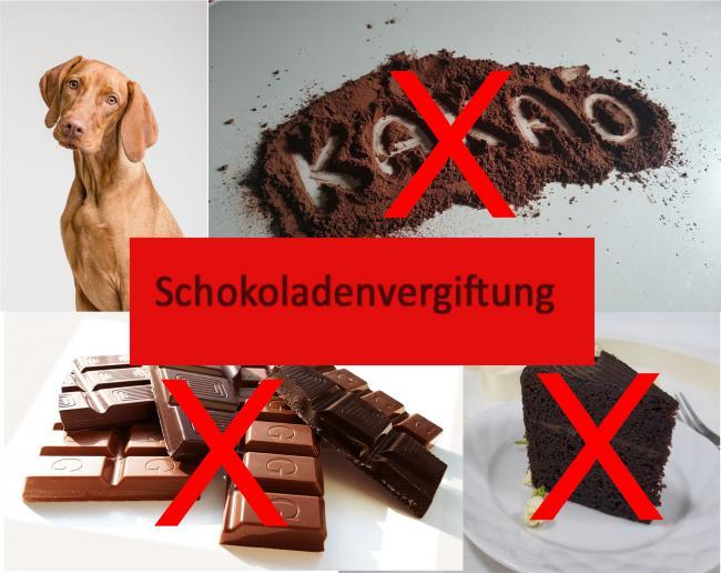 Schokoladenvergiftung